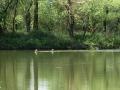 Mura-Carp-Lakes-Chris-Bienert-Rehe.jpg